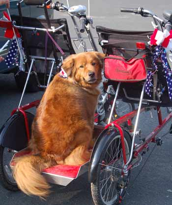 Biking Dog Charley Brown ready for Quadribent ride
