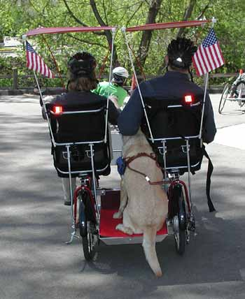 A view from the back of the Quadribent with two riders and Yellow Lab service dog.